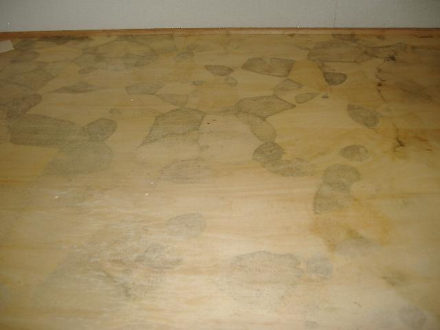 カビの発生した床(イメージ)