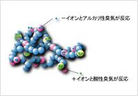 両性イオンとの化学結合