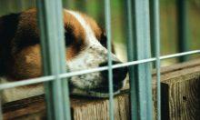 動物愛護保護施設
